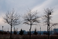 Urban Tree Triptych 3422