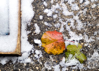 Red Yellow Green Leaves and Snow 6479