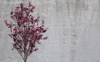 Red Tree and Wall_4687